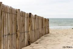 IMG_0272 (Azezjne (Az photos)) Tags: canon 75300 50 stm 600d berck sur mer bercksurmer cote côte dopale bromance plage sable bokeh zoom coucher soleil sunset beach sand eclipse dune mouette animaux animalière flou 75 300