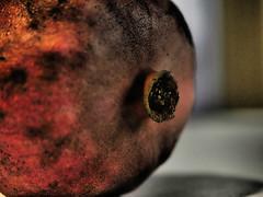 Before Eating (Rantz) Tags: australia australiancapitalterritory canberra dikaiosyne pomegranate rantz acton au