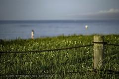 Summer scene  X-PRO2 with HELIOS-44-2 2/58 (higehiro) Tags: xpro2 helios442 258 fujifilm beach sea shore shonan japan