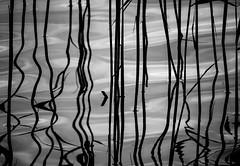 Nature lines (MortenTellefsen) Tags: abstract lines blackandwhite blackandwhiteonly bw svarthvitt linjer abstrakt forms pattern vannspeil reflection