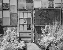 L1006365 (agianelo) Tags: blackandwhite greenhouse infrared