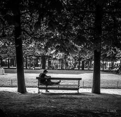 en passant par le jardin des Tuileries (Jack_from_Paris) Tags: l2011024bw leica m type 240 10770 leicasummicronm35mmf2asph 11879 dng mode lightroom capture nx2 rangefinder télémétrique bw noiretblanc monochrom wide angle paris jardin des tuileries bench banc arbres trees lecture sérénité calme