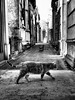Custodian cat (DarkLantern) Tags: buenosaires recoleta cemetery evita evaperon cementeriodelarecoleta argentina monochrome blackandwhite bw olympusomd em10 omd 17mmf18 streetphotography funerary funereal memorial buried grave tomb