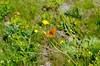 _D7K9491 (lions_italy) Tags: emilius escursioni gsv pila