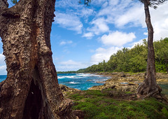 Rocky shore, Shefa Province, Efate island, Vanuatu (Eric Lafforgue) Tags: a0009977 adventures beach beaches beautyinnature cloudy coast coastal coastline color colour colourimage day destinations horizontal idyllic island melanesia newhebrides nopeople nonurbanscene oceania outdoors pacificislands pacificocean rock rockformation sand sandy scenery scenes scenics sea shore southpacific sunlight tourism tourist traveldestinations trees vanuatu water