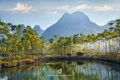 Grow Out to the Sun (fesign) Tags: bamboo china colourimage countryside day grass guangxizhuangautonomousregionchina guilin hill horizontal lake nonurbanscene outdoors photography pond reflection ruralscene tree water yangshuo shack hut lodge hovel