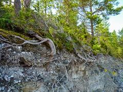 Panga cliffs (Nelleke C) Tags: 2016 estland estonia panga saaremaa cliffs coast holiday kliffen kust landscape landschap vakantie