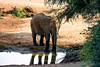 elefante em Samburu (anjutosi) Tags: quénia samburu