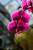 Another Pink Flower (Moxibustion) Tags: birds botanicalgardens flowers sydneybotanicalgardens wildlife sydney newsouthwales australia au