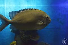 Pez (Liliana Es) Tags: fish pez acuario aquarium blue water