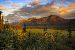 Alaska's Beautiful Wilderness (blkwolf1017) Tags: mountains sunset meadow spruce evening canon50d sigma1224mm