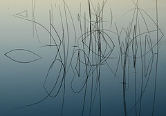 Stillness (Harry2010) Tags: lake grasses water mist greenlake britishcolumbia abstract nature outdoors