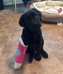 RT @DaiIyPups: Quinn had a little accident but is feeling a lot better 😍🐶 https://t.co/Yx6tuad9Mh (animalover.ry) Tags: animal animals lover lovers animalover