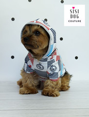 sisi dog couture, dog clothes pet clothing, pet supplies, dog hoodie, cothes for dog, ubranko dla psa (SisiDogCouture) Tags: clothes pet apparel doghoodie dogs animal animals yorkie yorkies chihuaua shihtzu lovers pup pups puppy fashion style accessories