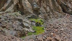 (liquidtvafternoons) Tags: moss grass rock snowmelt
