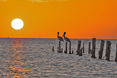 _40A9147 (ChefeGrande) Tags: sunset oldpier decaying pilons reflection outdoor brownpelican bird horizon dusk sun water seashore seaside sea serene silhouette landscape bay glow abandoned relaxing coastal