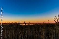 IMG_5436 (biglaptogs) Tags: barmera lakebonney riverland sa states sunsetsunrise