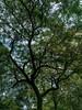 Tree I : Silhouette (theReedHead) Tags: milwaukee realism silhouette thereedhead wisconsin lakeparkmilwaukee olympusem5 olympusem5ii olympusem5markii olympus17mmf18 treesilhouette lakepark treecrowns olympus17mm botanical botany milwaukeephotographers wisconsinphotographers trees foliage