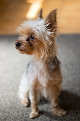 Chanelle (ChristopherPicture) Tags: chien york