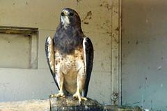 African Lion Safari (Tiger_Jack) Tags: zoos bird birds africanlionsafari zoo zoosofnorthamerica itsazoooutthere