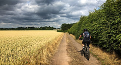 Kay and the Field of Gold (Gee & Kay Webb) Tags: mtb mountainbike cycling riding outdoors bike bicycle trails farm agriculture wheat clouds weather hedgerow