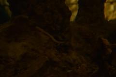 sDSC_4326 (L.Karnas) Tags: slowenien slovenia slovenija sommer summer juli july 2017 postojna cave postojnska jama grotte di postumia höhlen von pivka river inner carniola notranjska littoral olm proteus grottenolm
