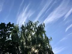 195/365: Streaks and Leaves