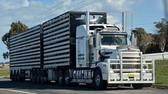 John Congram (quarterdeck888) Tags: trucks transport semi class8 overtheroad lorry heavyhaulage cartage haulage bigrig jerilderietrucks jerilderietruckphotos nikon d7100 frosty flickr quarterdeck quarterdeckphotos roadtransport highwaytrucks australiantransport australiantrucks aussietrucks heavyvehicle express expressfreight logistics freightmanagement outbacktrucks truckies stockcrate bdouble livestock kenworth t659 squaretanks