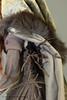 Larandrin (nightswood) Tags: artdoll sculpture polymerclay fantasy troll trollmaiden huldra hulder ooak oneofakind