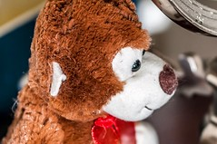 Lens Testing– didn't realize how dusty that bear is. (m1hoff) Tags: brown sharp focus toys stuffedanimal teddybear sigma sigma50100mm18dcart