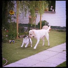 Dog Pets Domestic Animals Animal Themes Mammal Outdoors Full Length Day Playing Togetherness Grass No People Nature Tree (lilymay.parker) Tags: dog pets domesticanimals animalthemes mammal outdoors fulllength day playing togetherness grass nopeople nature tree