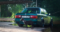 E30 and pitbull puppy (Sandra_Step) Tags: lagunengruen metallic e30 bmw green emerald hood bra lake daugavpils latvia pitbull puppy apbt dark brown dog mtech2