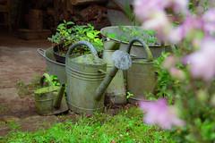 S.MasséMaisonduMajordome©TourismeHautLimousin-9 (tourisme_hautlimousin) Tags: jardin gîte vacances hautlimousin patrimoine location fleurs botanique tourolim