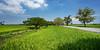 ... (Zairi) Tags: tanjungdawai sungaipetani kedah landscape kampung ricefield paddyfield