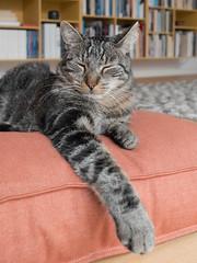 Posing (Ghita Katz Olsen) Tags: cat katze gatto pet animal pillow sleepy