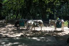 (daniel.hughley) Tags: bigsantaanitacanyon camping chantryflats cran glamping santaanitacanyon sturtevantcamp