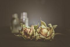 ROSANA (Ayeshadows) Tags: rosana roses yellow bottles empty flora 7dwf friday