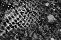 Jardim Quintal - Wir Caetano - 16 07 2017 (13) (dabliê texto imagem - Comunicação Visual e Jorn) Tags: peneira arame