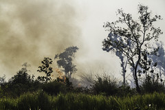 Brush Fire (Keith Kelly) Tags: anlongklong asia brushfire cambodge cambodia kh kampuchea keithkelly krakor pursatprovince sky southeastasia bushes country countryside farmland fire grass keithakelly rural smoke trees pouthisat