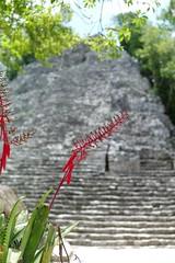 Cobá pyramid (•Nicolas•) Tags: flower fleur holidays vacances coba ruines ruins mexique mexico maya pyramide pyramid m9 nicolasthomas
