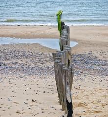 Piquets de bois (Pop626262 (Fort occupé)) Tags: freedom pasdecalais mer plage bois piquet sable caillou galet eau vert bleu