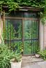 Indoor Plants (mrcraige) Tags: plants tokyo japan japanese overgrown haikyo abandoned ivy wild dmcgf1 gf1