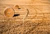 Monocrome (AL) (Ondablv) Tags: frano rotoballe campo campi giallo coltivato coltivati ondablv