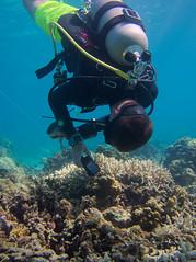 Survey (PacificKlaus) Tags: malapascua visayas cebu philippines underwater ocean nature scuba diving diver survey peopleandthesea