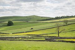 Summer fields at Litton, Derbyshire (Keartona) Tags: whitepeak peakdistrict litton england landscape countryside summer june fields green meadow drystone wall walls