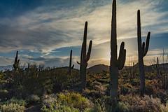 SaguaroNP (svubetcha) Tags: landscape flowers arizona sunset bridge hourse mission gas utah