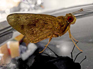 Fragile Insect