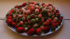 Tray with two kinds of home-grown strawberries (angeloska) Tags: ikaria aegean greece summer ικαρία strawberries φράουλεσ home simplelife rurallife villagelife fruit farming