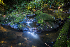 Trickle down economy (Rakuli) Tags: ifttt 500px forest water river green waterfall long exposure cascade moss brook creek algae