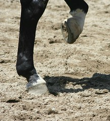 got my dancing shoes on...let's rock... (Kens images) Tags: horses behaviour poses art rural competition dance canon